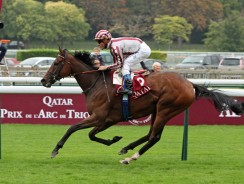 Horse Racing Tips : Ascot Live Stream & Champion Stakes odds – Back Cirrus des Aigles at 7/1